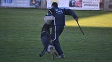 El Prado acogió la XX edición de la Copa de España para Perros de Utilidad