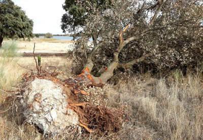 Ganemos denuncia los daños causados en La Portiña en la construcción de la conducción de agua potable a Segurilla y Cervera