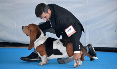 M�s de 4.000 perros avalan un nuevo �xito de la Exposici�n Internacional Canina