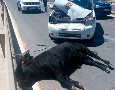 El Ayuntamiento pide a la dirección de La Caprichosa 2.300 euros por los daños del vehículo que embistió al toro en mayo
