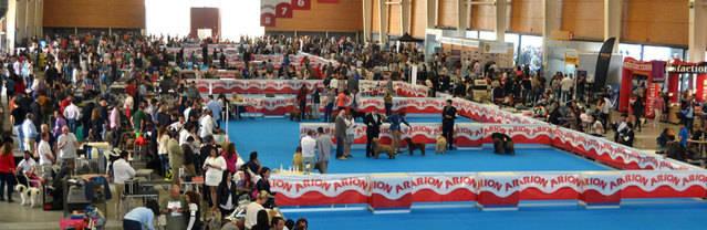 Talavera Ferial acoge durante el fin de semana la XXXII Exposición Internacional Canina