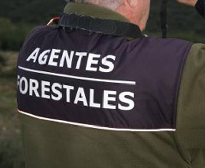 La Junta sanciona a seis agentes forestales