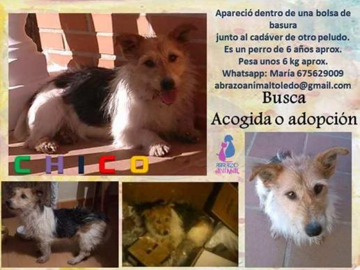 Un perro maltratado, rescatado en Montesclaros