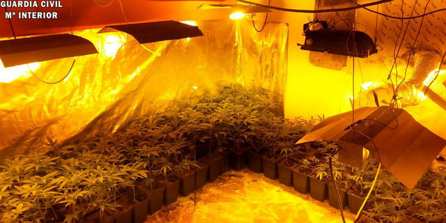 Detenidas dos personas que ocultaban 177 plantas de marihuana