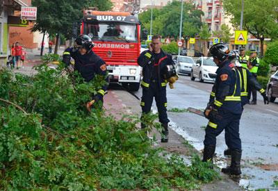 El fuerte viento de tormenta provoca la caída de parte de un árbol en la Avenida Pío XII