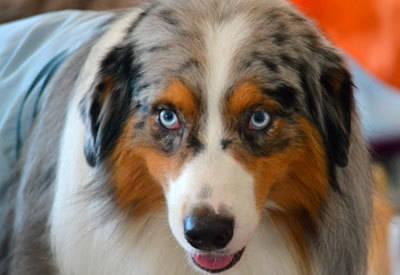 Nuevo éxito canino en el Ferial
