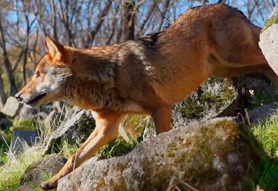 'WildMed', película de naturaleza del talaverano Arturo Menor, obtiene ocho candidaturas para los Goya