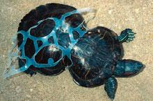 La basura de nuestros océanos sigue dañando animales