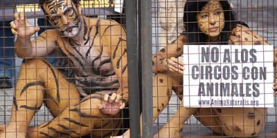 Se retira del pleno la moción sobre una ciudad libre de circos con animales
