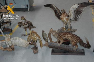 La Guardia Civil decomisa seis especímenes de Especies Amenazadas en una tienda de Cazalegas
