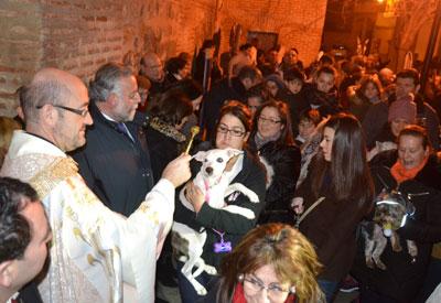 Decenas de animales, protagonistas en la bendición de San Antón en Talavera