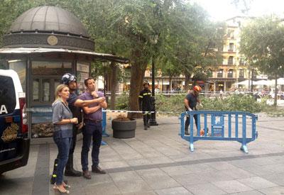 Caen varias ramas de �rboles en la c�ntrica plaza de Zocodover de Toledo