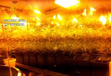 La Guardia Civil desmantela una plantación indoor con 1000 plantas de marihuana y detiene a una persona