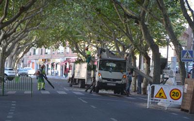 Abierta nuevamente la calle Carnicerías tras finalizar la tala parcial de los árboles