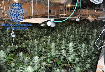 Once individuos detenidos en la desarticulación de un grupo dedicado al narcotráfico