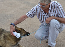 El Ayuntamiento delimita espacios y horarios para la suelta segura de perros