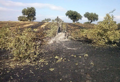 La Guardia Civil imputa a dos personas por el incendio forestal de Valdeverdeja