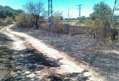 Nuevo incendio forestal junto al embalse de Cazalegas que arrasa dos hectáreas
