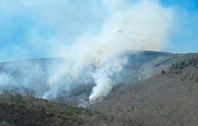 Un incendio en El Real de San Vicente arrasa una zona de castaños