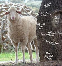 III Simposio Internacional de la Lana 'Working with wool'