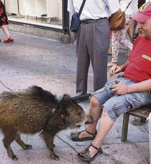 Una mascota muy peculiar por Talavera