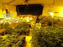 La Guardia Civil desmantela un laboratorio de marihuana en Yuncler con 138 plantas