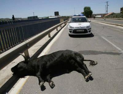 Sin resolver el caso del toro que se escapó