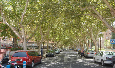 La poda parcial de los árboles de Carnicerías prohibe el estacionamiento este jueves y viernes