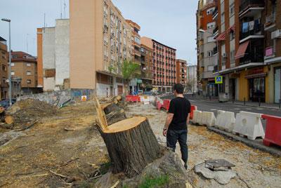 Gran malestar e indignación por la tala de los árboles de la Portiña de San Miguel