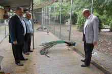El pavo real de los Jardines del Prado se traslada provisionalmente al IES San Isidro