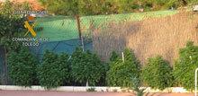 La Guardia Civil detiene a dos personas por cultivar plantas de marihuana