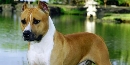 La Policía localiza a la dueña del perro que hirió de muerte a otro tras morderle