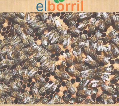 El Borril abre sus puertas el 5 de junio