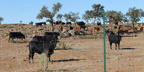 La Diputaci�n de Toledo saca a la venta ganado de lidia