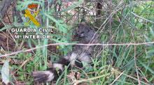 Detenido por un delito contra la fauna en Almadén