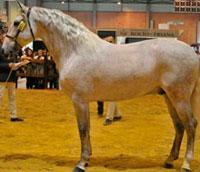 La Yeguada Jama, regentada por los hermanos Miguel y José Antonio Martín de Talavera, ha conseguido ser subcampeona de España con el caballo Belmonte
