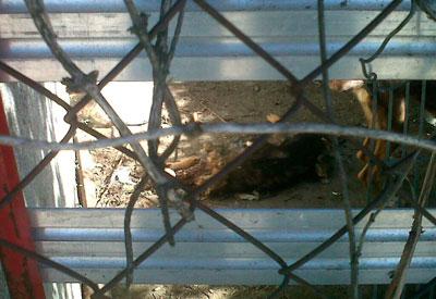 El SEPRONA encuentra dentro de una jaula un perro decapitado en una parcela de El Gran Chaparral