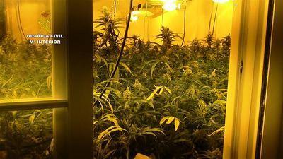 Desmantelado otro centro de cultivo de marihuana en la provincia