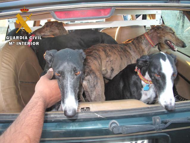 Se han aprehendido 1 vehículo, 5 canes de raza galgo y tres liebres
