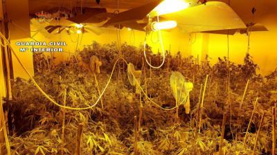 Desmantelado un laboratorio de cultivo de cannabis compuesto por 270 plantas