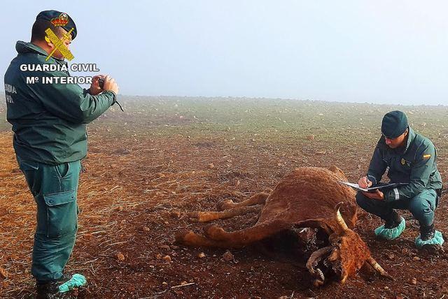 Investigan al dueño de una explotación ganadera por maltrato animal