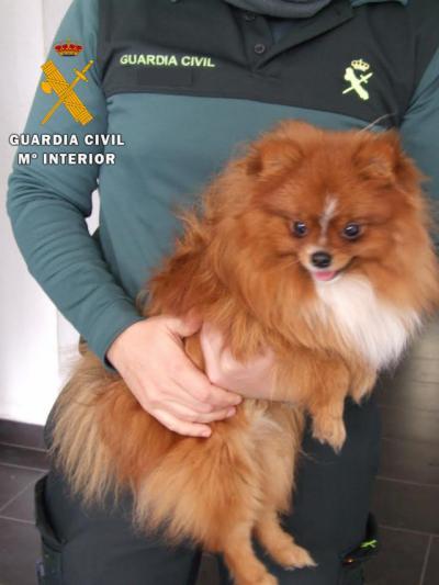 Detenido un vecino de Almansa por robar un perro valorado en 600 euros de una vivienda de Lorca
