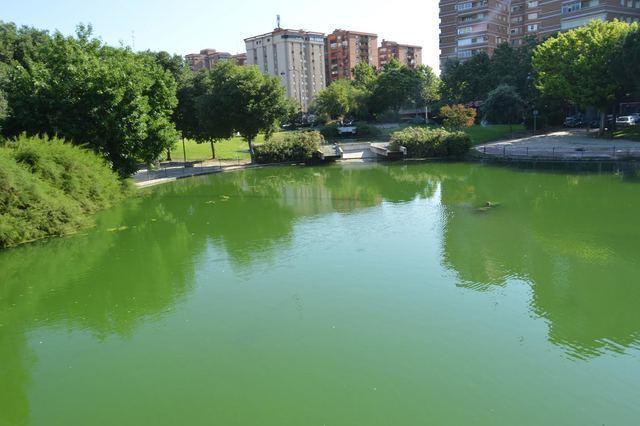 El Ayuntamiento retira las algas del lago de La Alameda tras la polémica por su mantenimiento