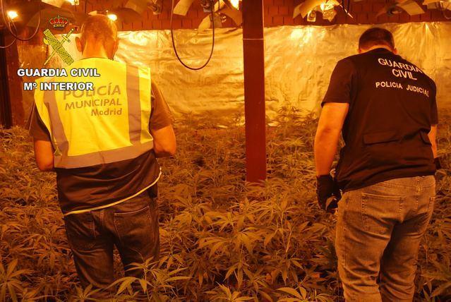 La Guardia Civil desmantela cinco plantaciones de marihuana en El Casar