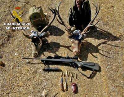 Dos detenidos por cazar de forma furtiva dos ciervos