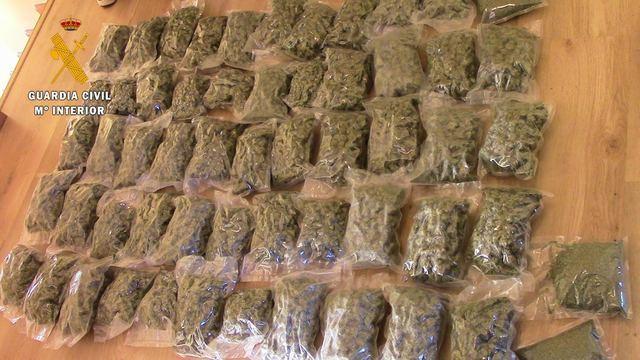 Desmantelan 2 plantaciones de marihuana con 3.589 plantas y detienen a 5 personas