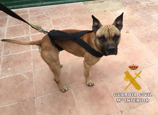 Dos detenidos, uno de ellos menor, por sustraer tres perros de una protectora de animales