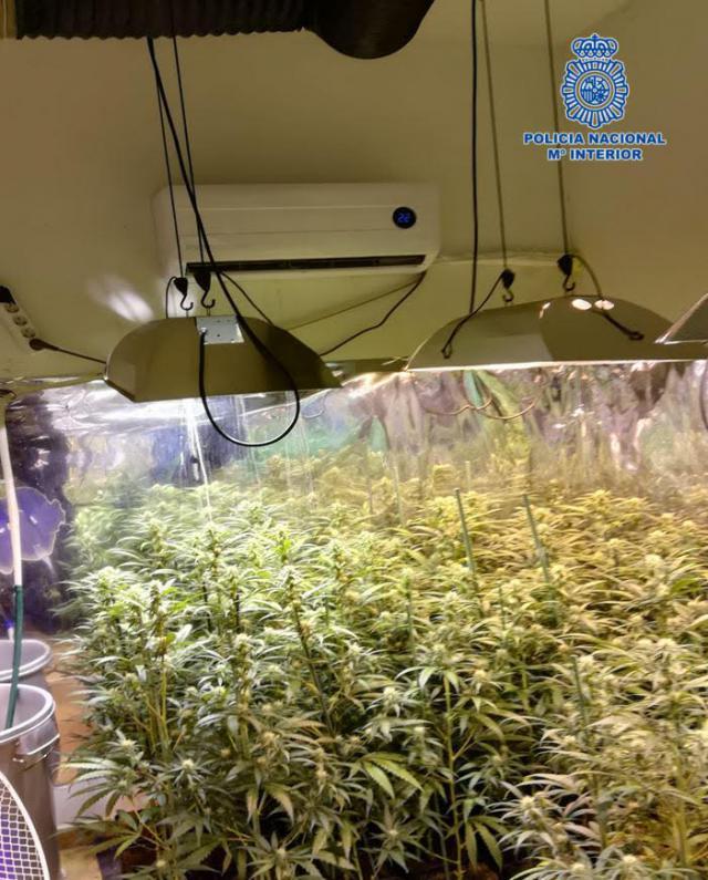 Desmantelados 2 laboratorios clandestinos donde se cultivaba marihuana