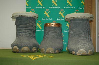 La Guardia Civil interviene tres patas y un colmillo de elefante en la ciudad de Toledo