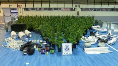 Desmantelado un centro de cultivo de marihuana de interior con 296 plantas